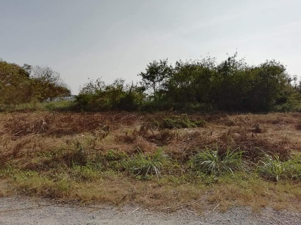 368 SQ.M Land For Sale - Bangsaray  - Land -  -